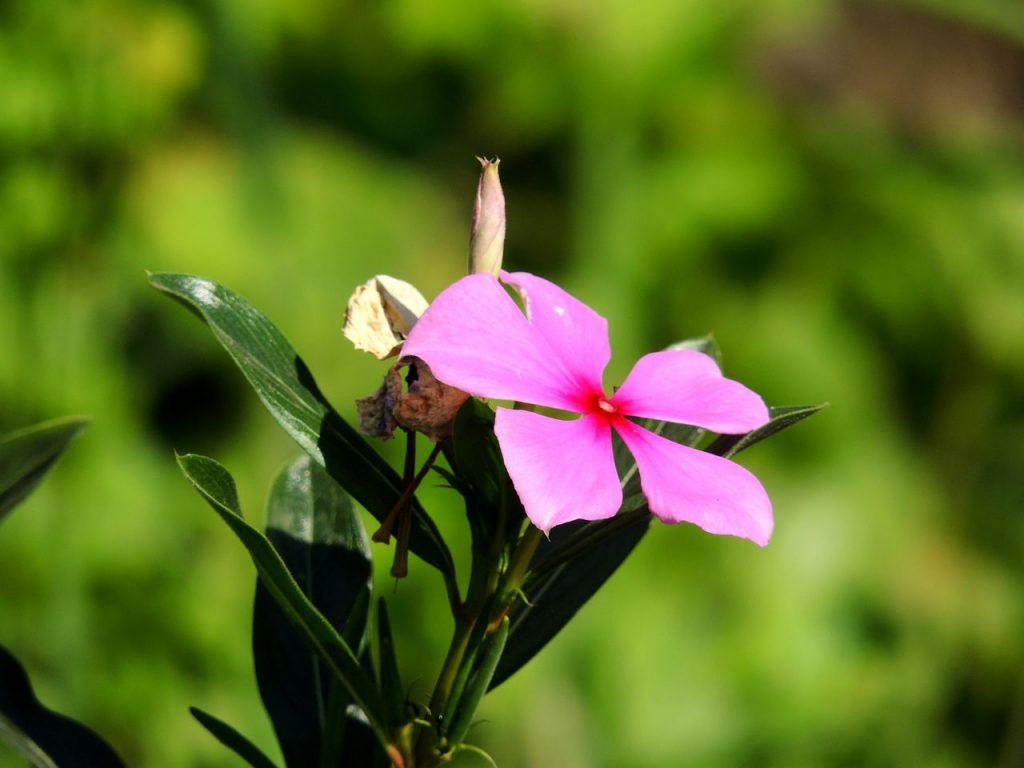 Auf diesem Bild siehst du eine pinkfarbene Blüte zum Thema die Megatrends und die Wissenskultur