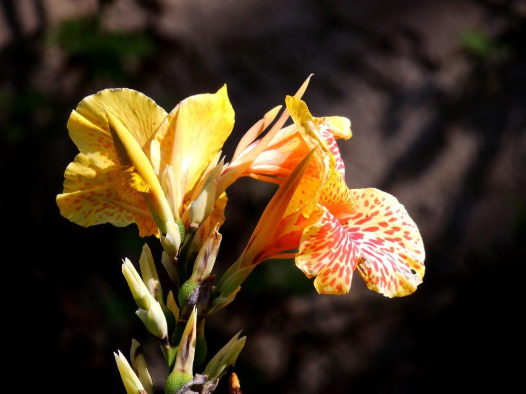 Auf diesem Bild siehst du zwei gelbe Blüten zum Thema die Megatrends und die Konnektivität