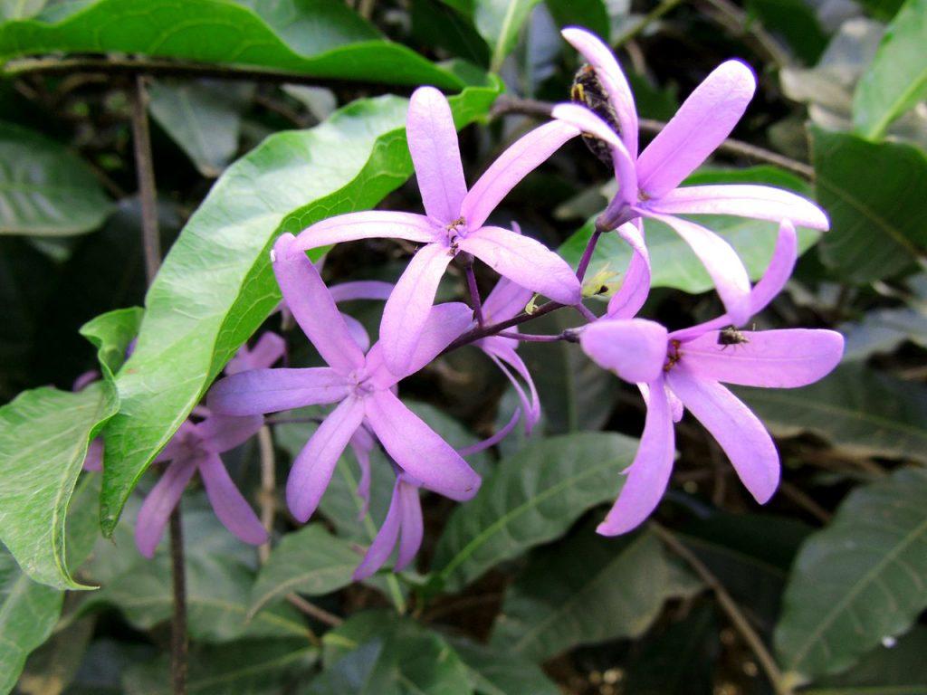 Auf diesem Bild siehst du vier lilafarbene Blüten zum Thema die Megatrends und die Neo-Ökologie