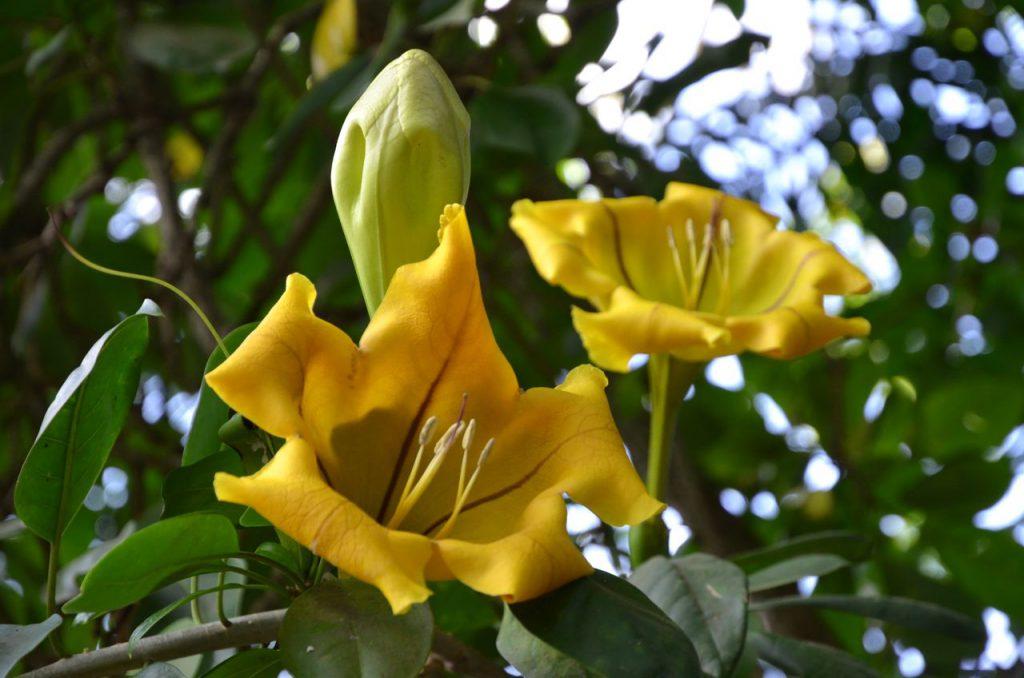 Auf diesem Bild siehst du zwei gelbee Blüten zu dem Thema die Megatrends und das New Work