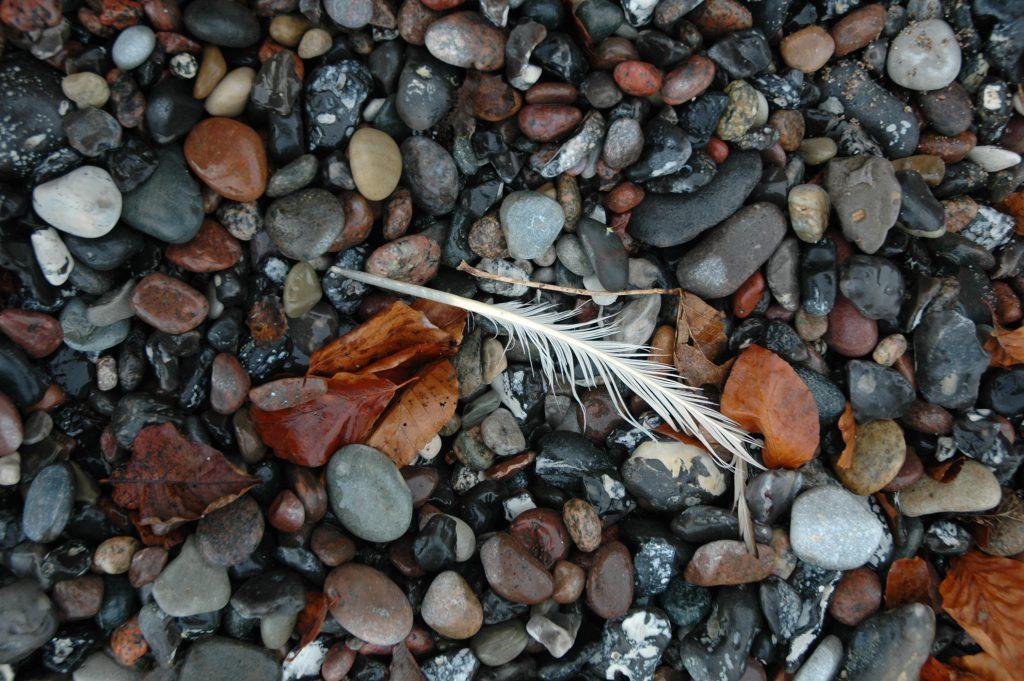 Steine mit einer nassen Feder